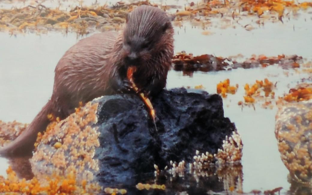 Mum's Otter